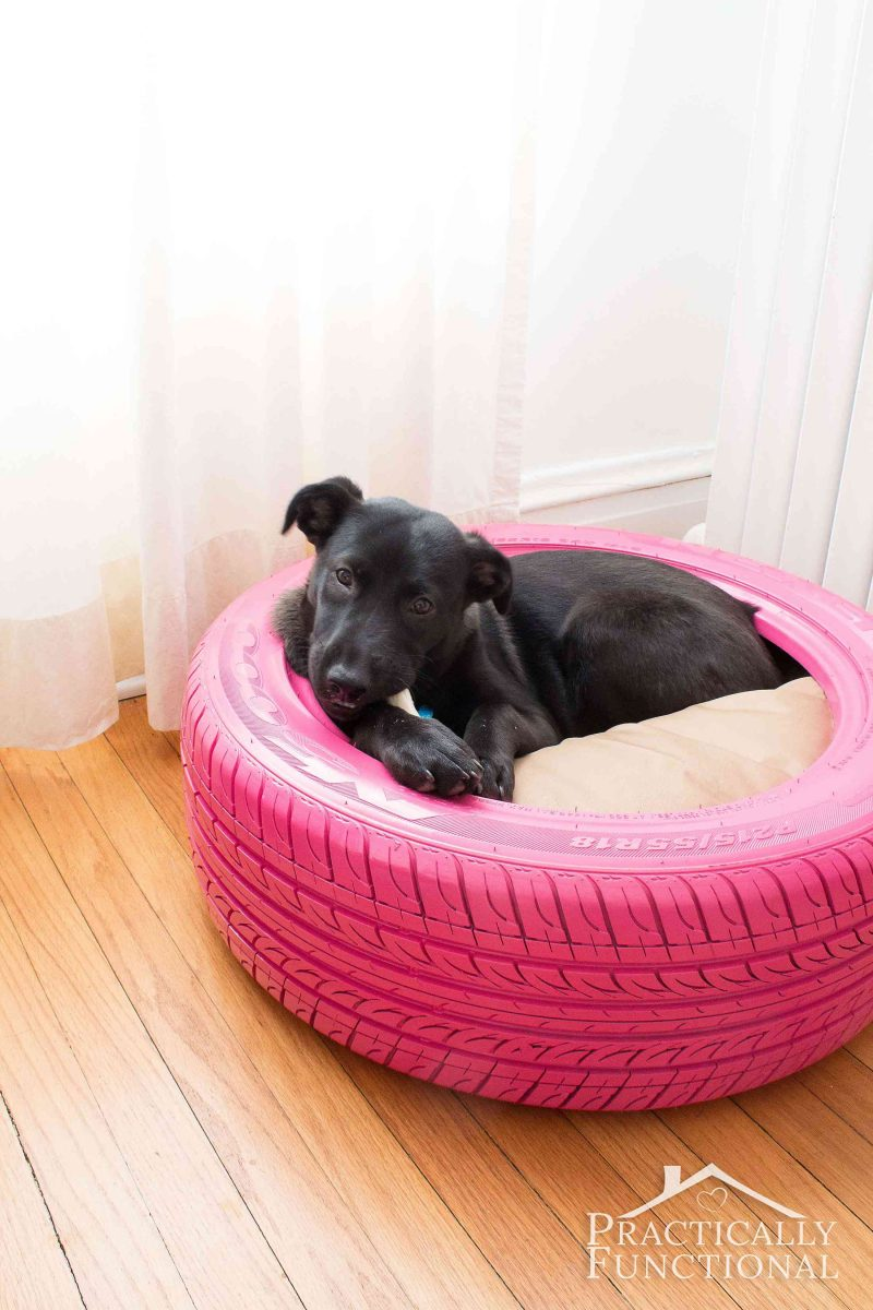 Dog Beds Easy Diy Dog Beds For Your Pups Bsb