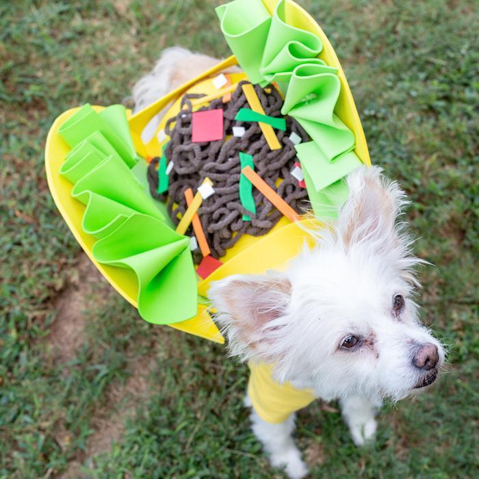 Funny Dog Costumes