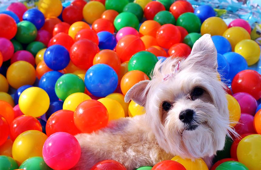 Dog Activities