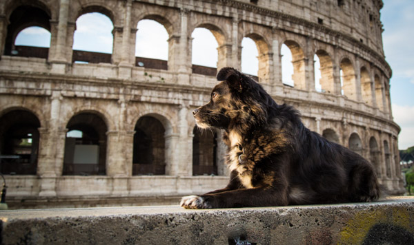 Holidays with Dogs- Visit Landmarks Worldwide - BSB Dog Travel