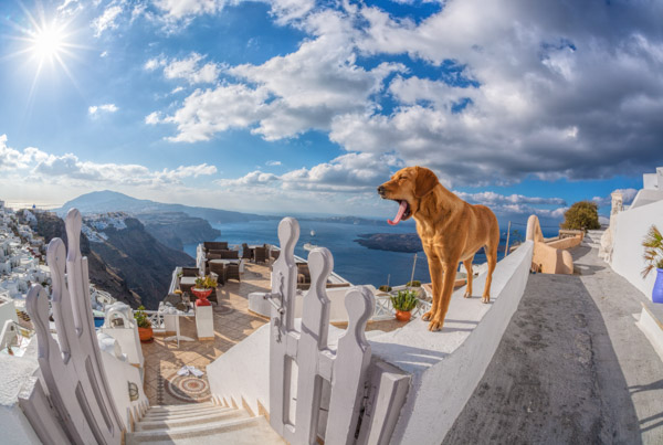 Holidays with Dogs