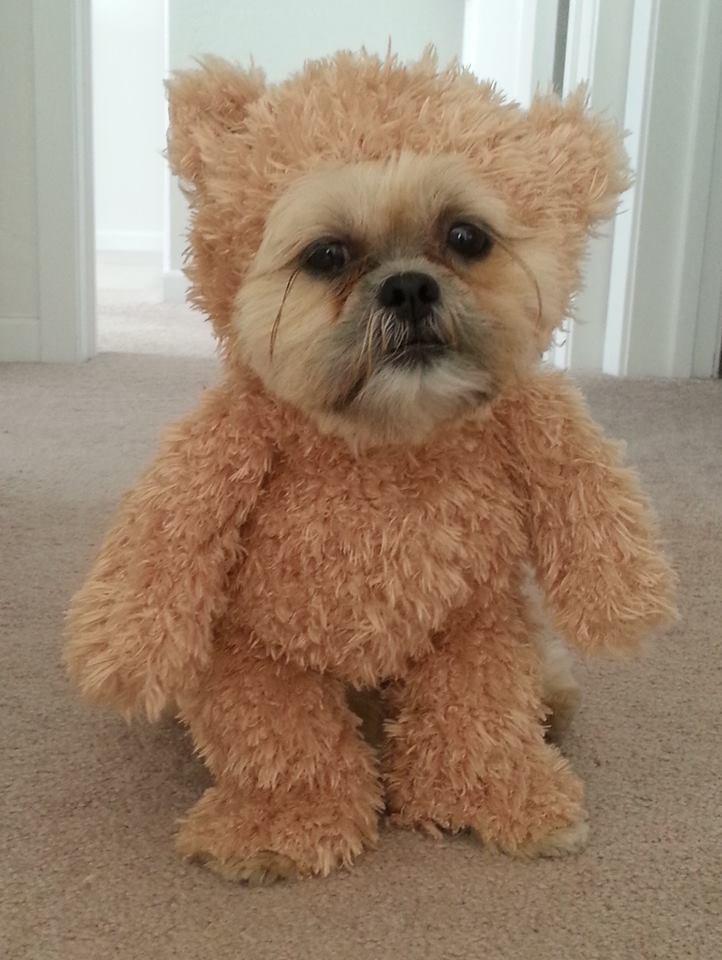 Funny Dog Costumes: DIY Dog Costume Ideas