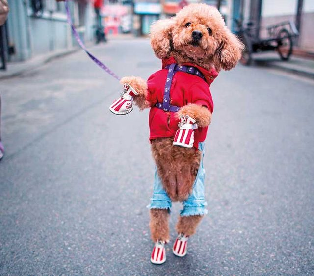Dogs with Style