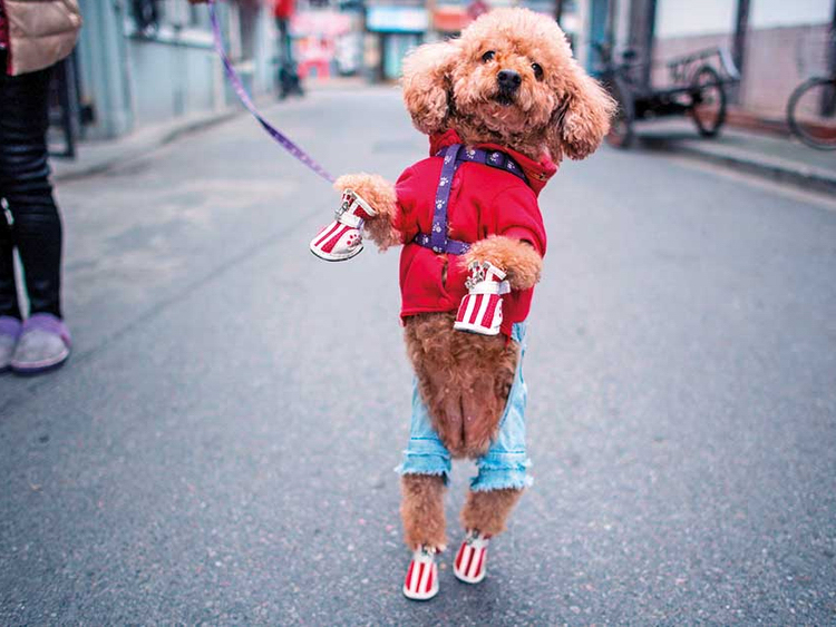 Cute Dogs with Stylish Dog Clothes