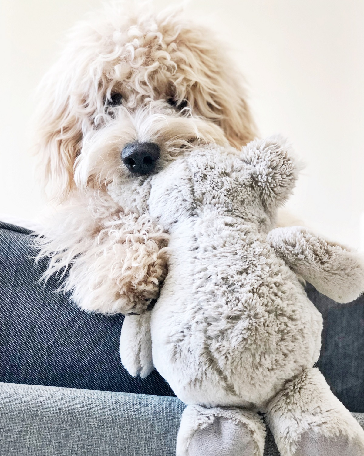 Dog Activities: Games To Play With Your Dog Indoors