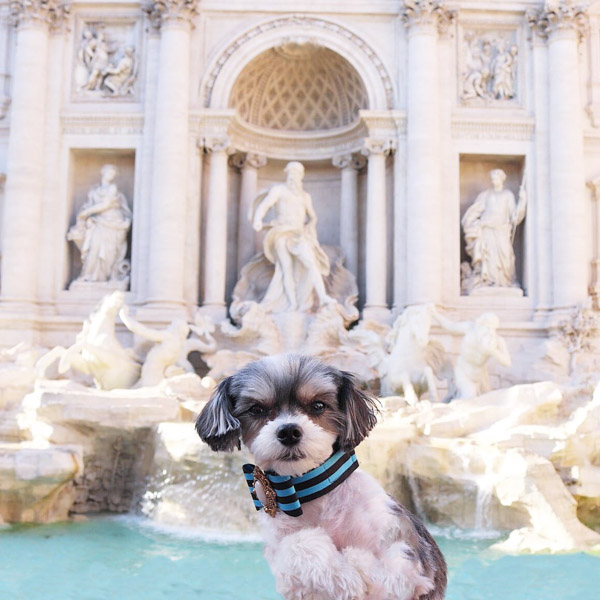Holidays with Dogs- Visit Landmarks Worldwide